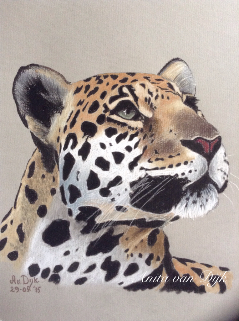 764x1024 Luipaard Coloured Pencils, Draw And Animal
