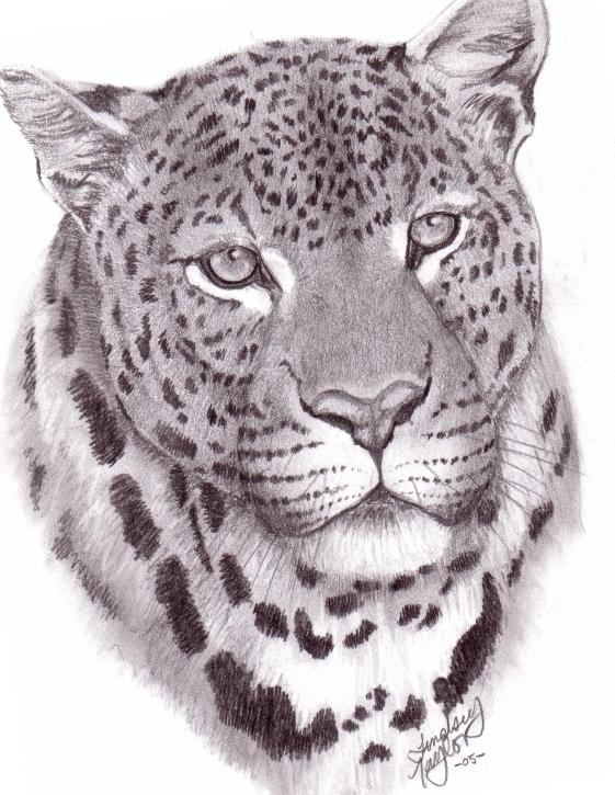 561x725 Jaguar Drawing How To Draw A Cartoon Jaguar Step By Forest Animals.