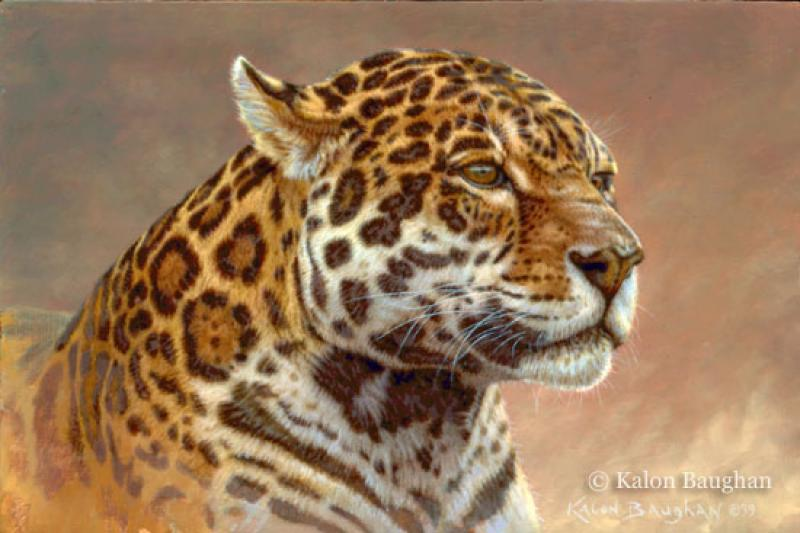 800x533 Jaguar Portrait