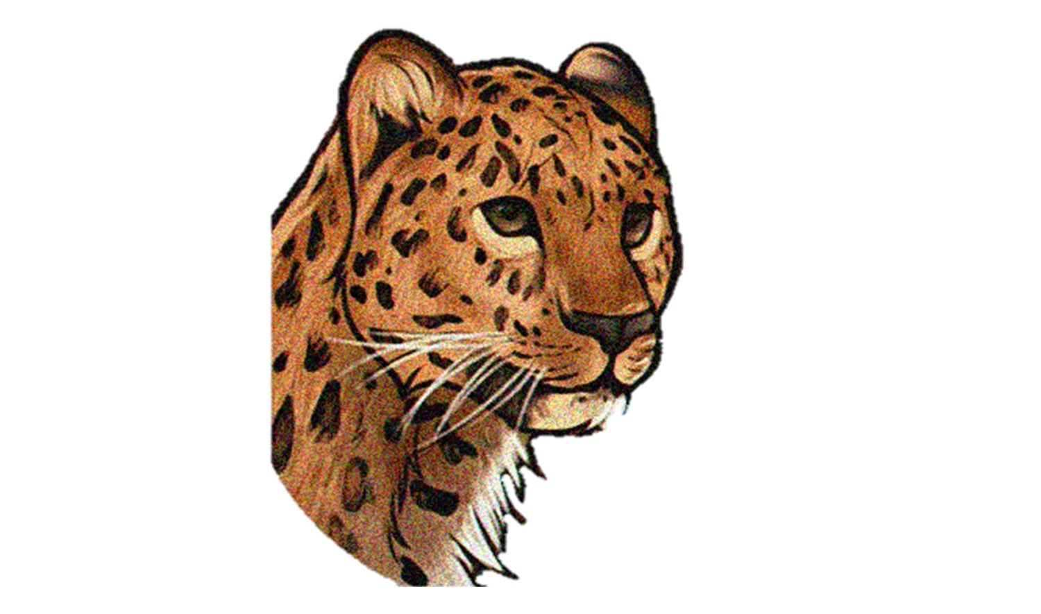 1500x885 How To Draw A Jaguar (Animals)