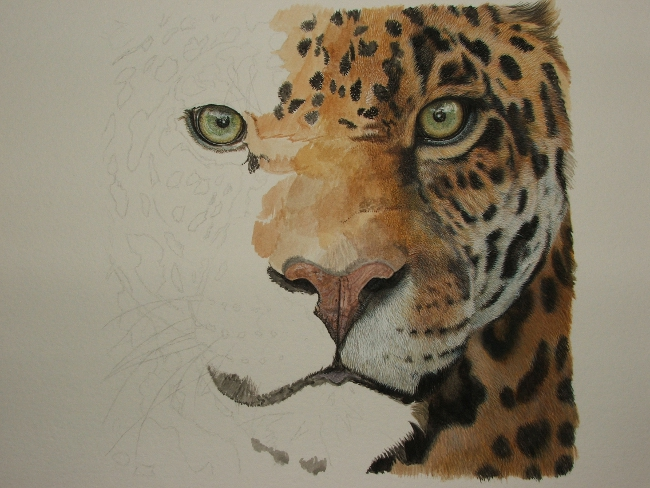 650x488 Wildartcapture Julia Ruffles Jaguar Progress