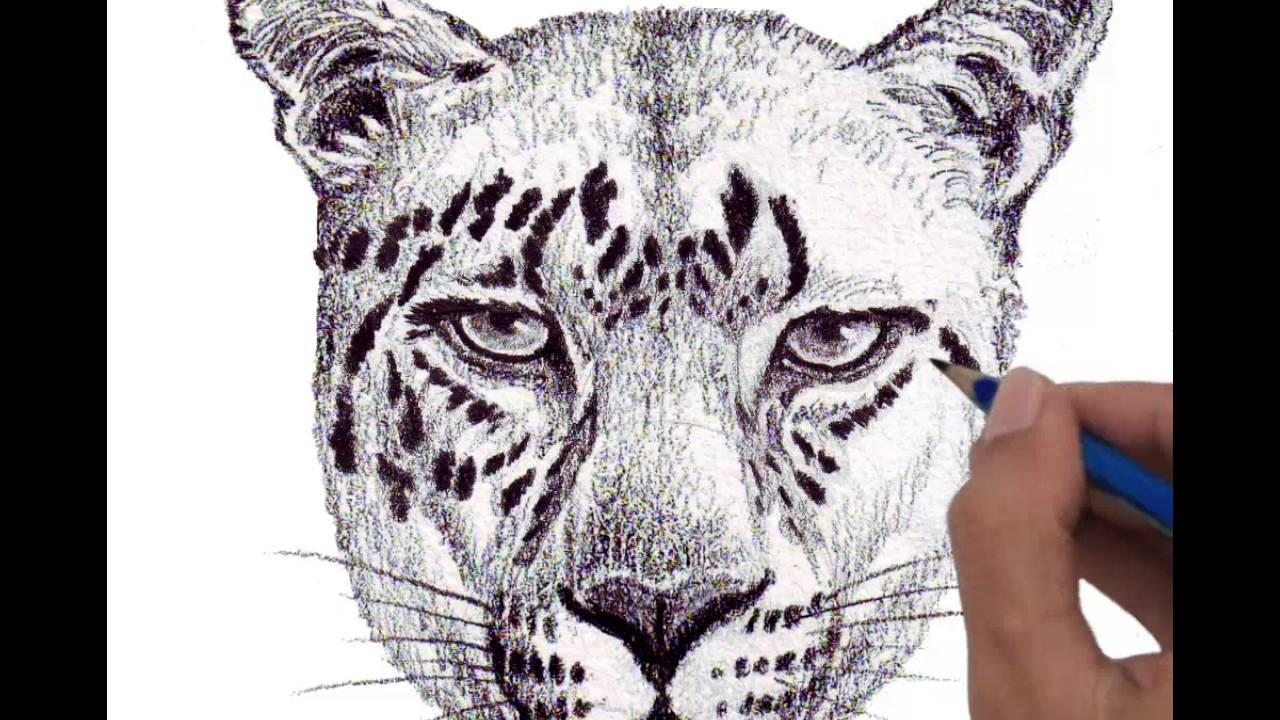 1280x720 Drawing Head Jaguar Full Step