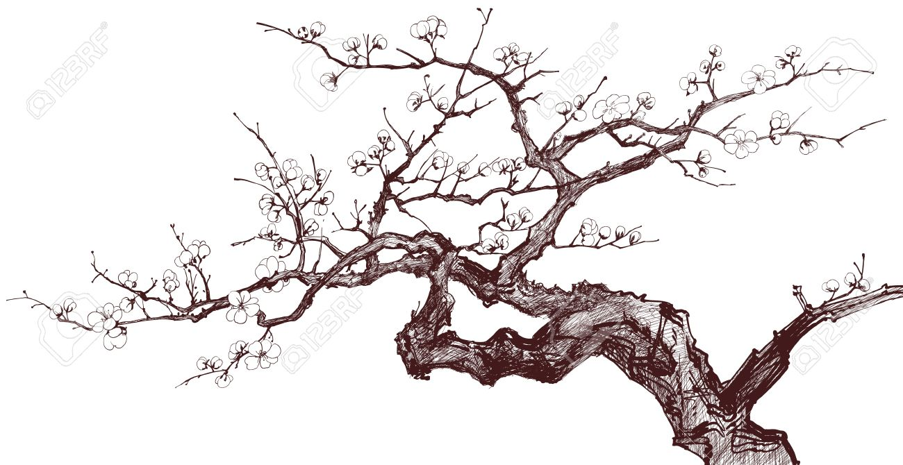 1300x670 Vector Illustration Of A Blossoming Cherry Tree (Inked Drawing