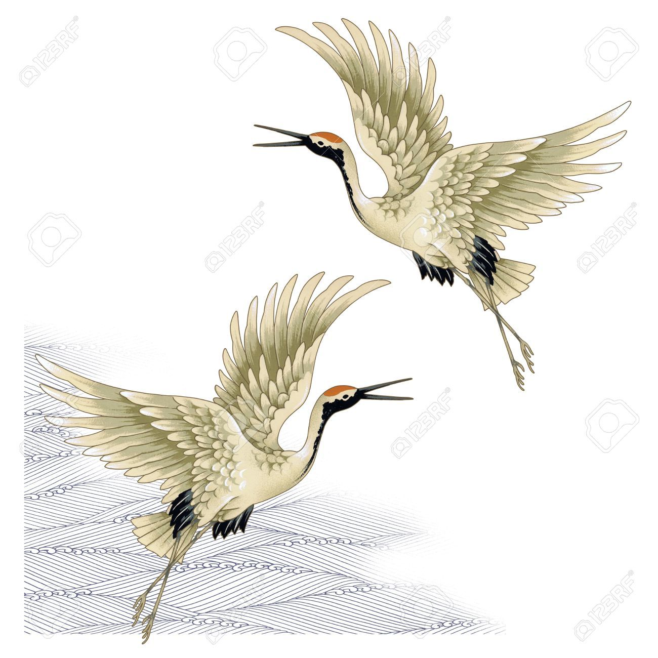1300x1300 17966575 A Japanese Crane Stock Photo Crane Bird.jpg