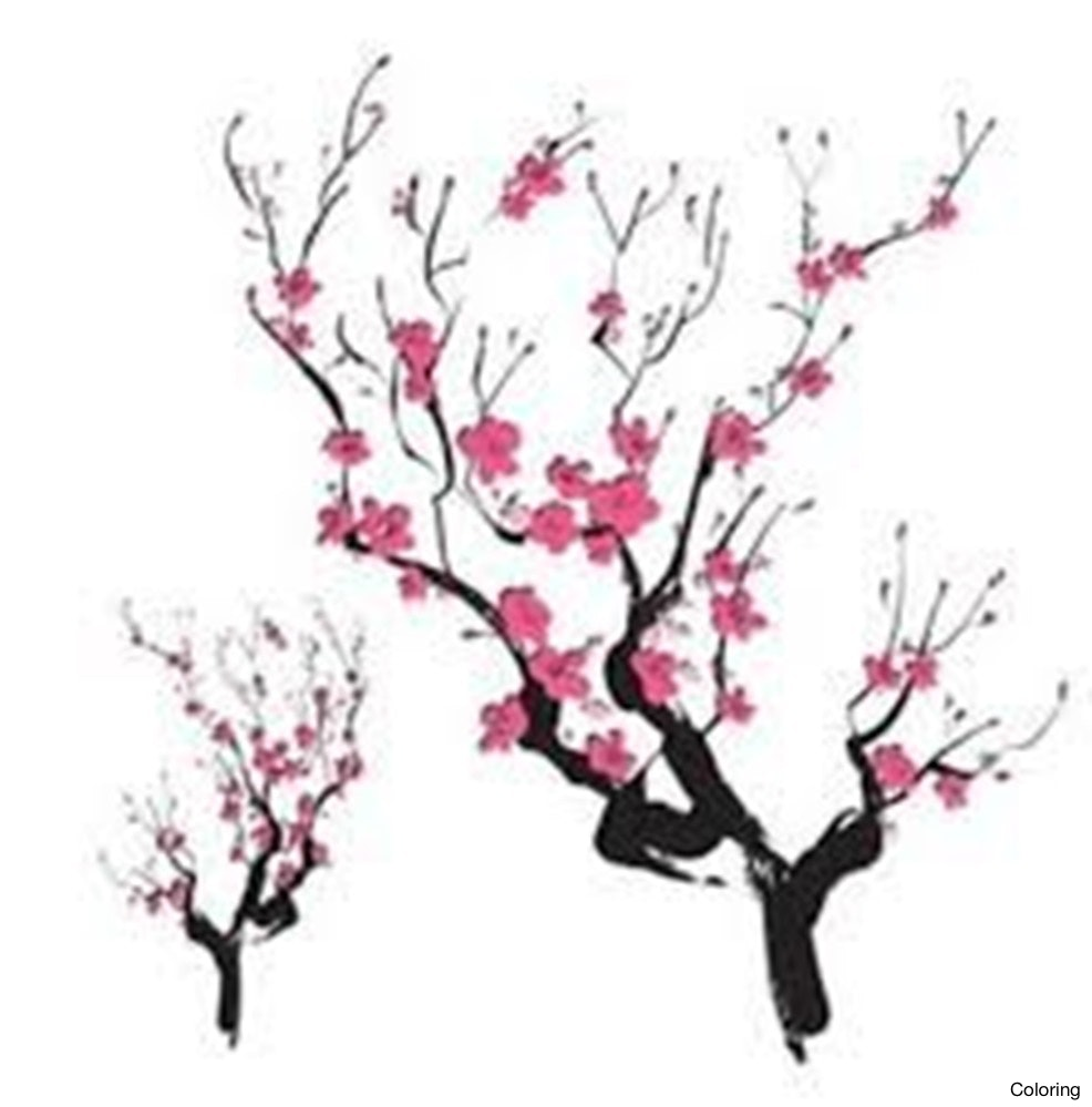 986x999 Cherry Blossom Drawing Coloring Branch With Falling Petals