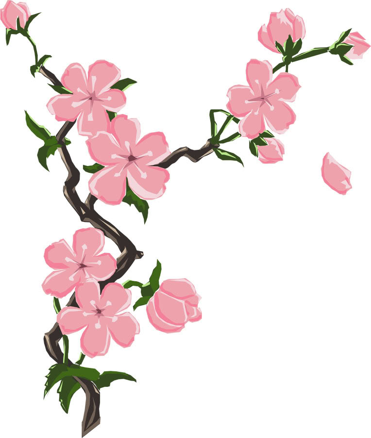 764x900 Drawn Cherry Blossom Sakura Flower Pencil And In Color Drawn How