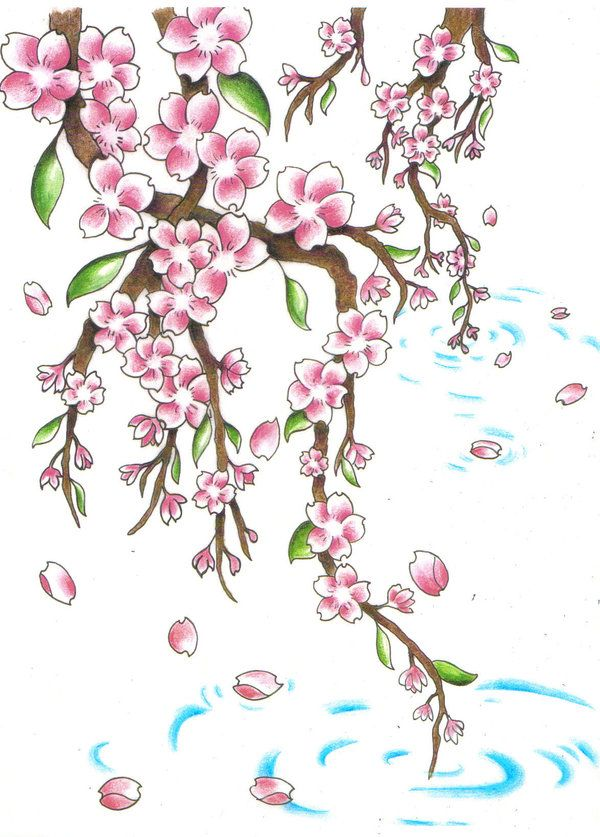 600x837 33 Best Cherry Blossom Tattoo Drawings Images