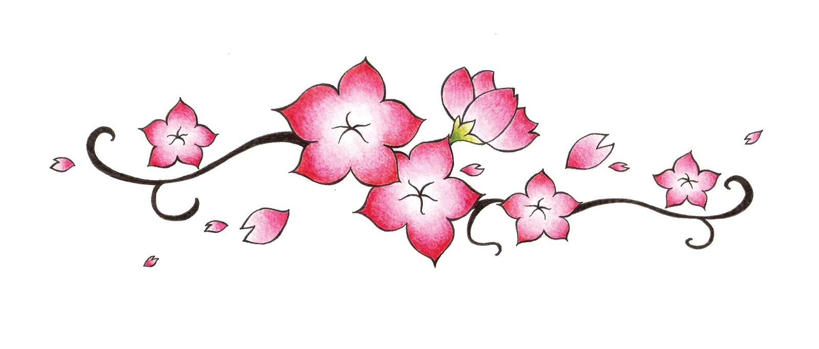 1600x683 Cherry Blossom Drawings Cherry Blossom Flower Drawing