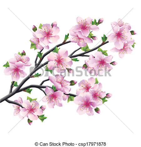 450x470 Anese Tree Sakura Cherry Blossom Isolated