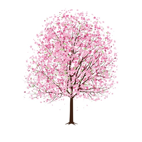 495x495 13 Cherry Blossom Tree Designs Images