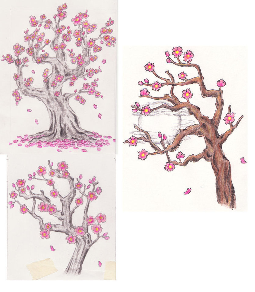 836x955 3 Cherry Blossom Tree Sketches By Lexie613