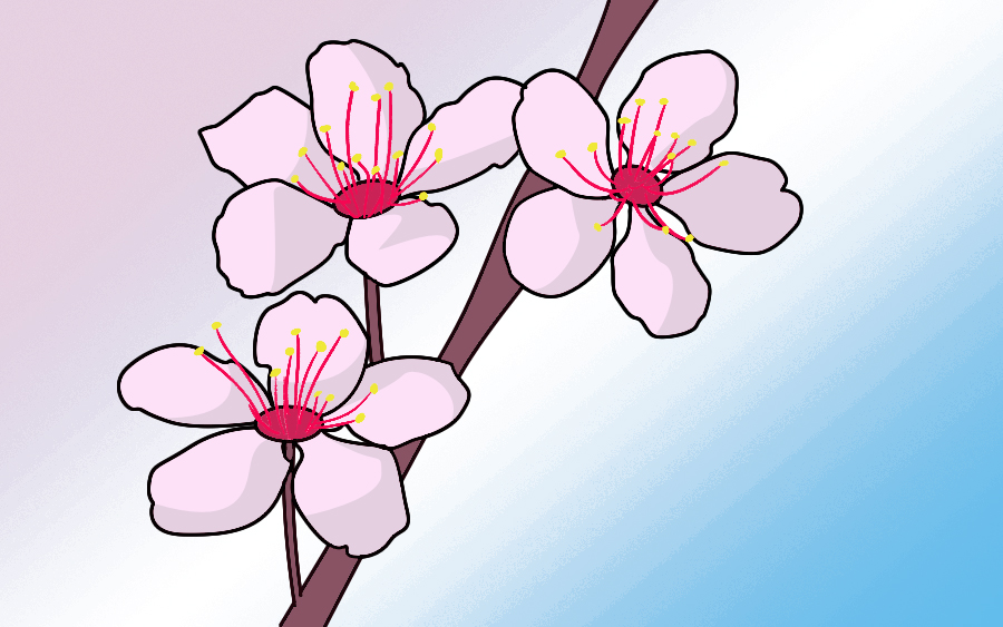 900x563 How To Draw Cherry Blossoms