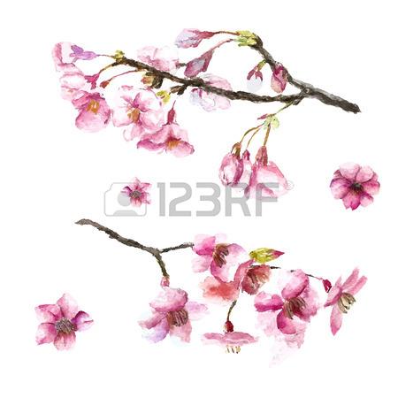 450x450 Watercolor Cherry Blossom. Hand Draw Cherry Blossom Sakura Branch