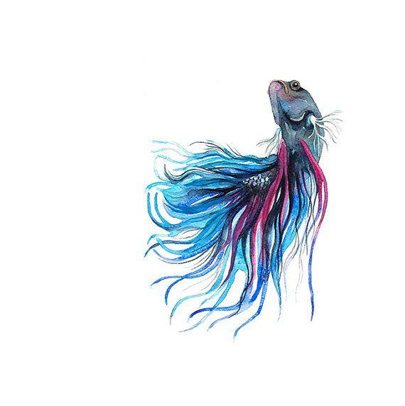 570x572 Siamese Fighting Fish Watercolor By Barbaraszepesiszucs On Etsy