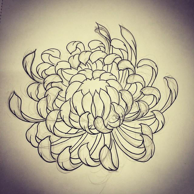 640x640 Chrysanthemum Sketch By Rebekka Rekkless Via @rebekkarekkless