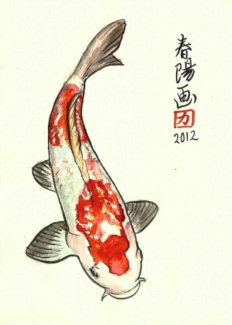 464x649 Illustrations By Carmen Harada Artsies Koi, Fish