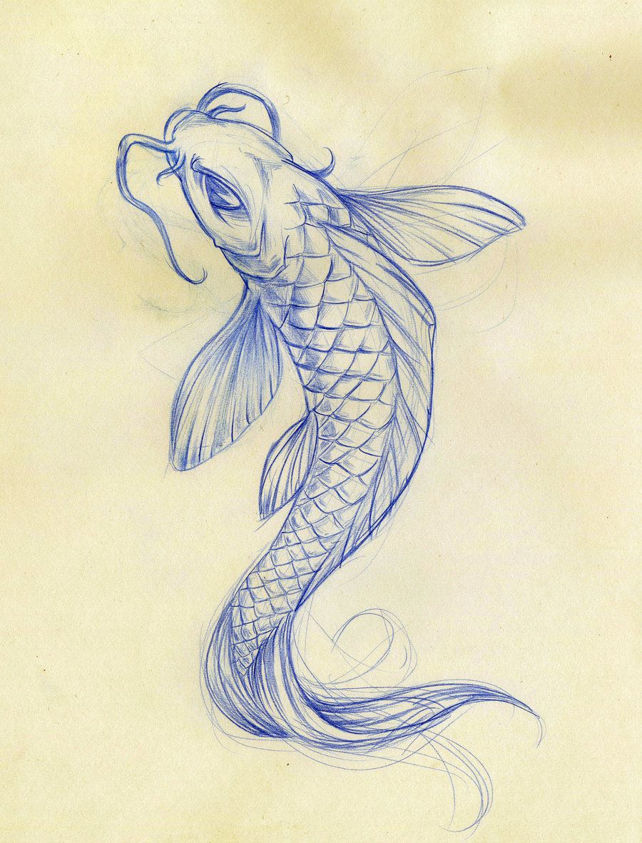 900x1181 Koi Fish Drawings Koi Fish Sketch By Daeo Traditional Art