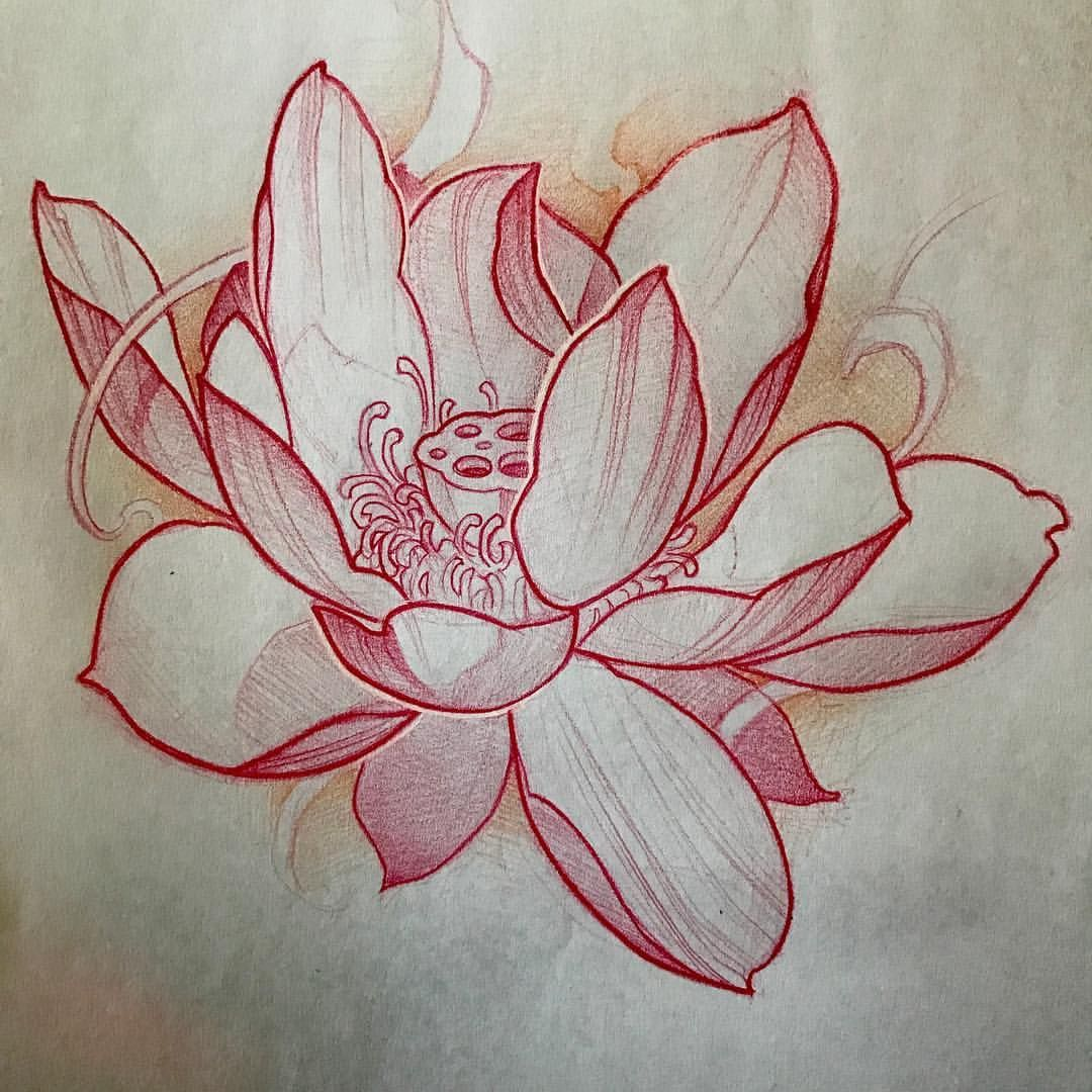 Japanese Lotus Flower Drawing At Getdrawings Free For Personal