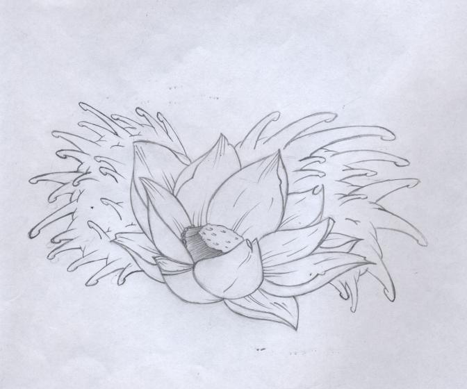 672x560 Dave Tatoos Ideas Traditional Japanese Flower Tattoo Designs