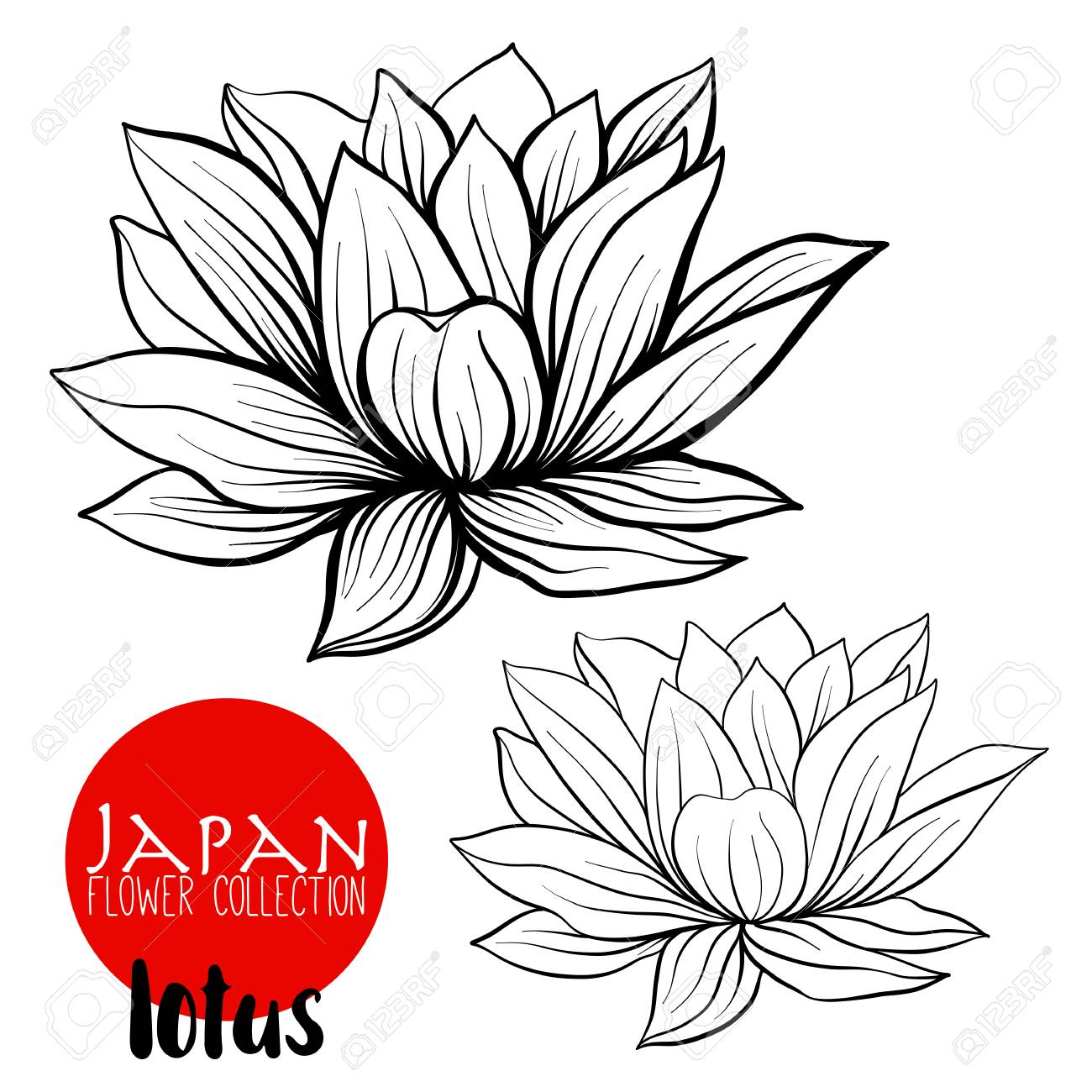 Japanese lotus flower drawing at getdrawings free for personal 1300x1300 lotus flowers stock line vector illustration botanic flowers izmirmasajfo