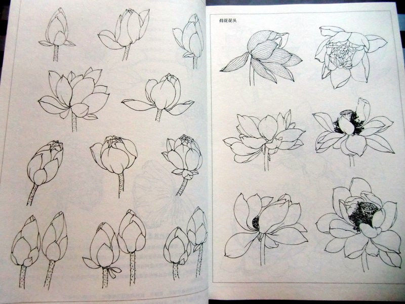 800x600 How To Draw A Lotus Flower