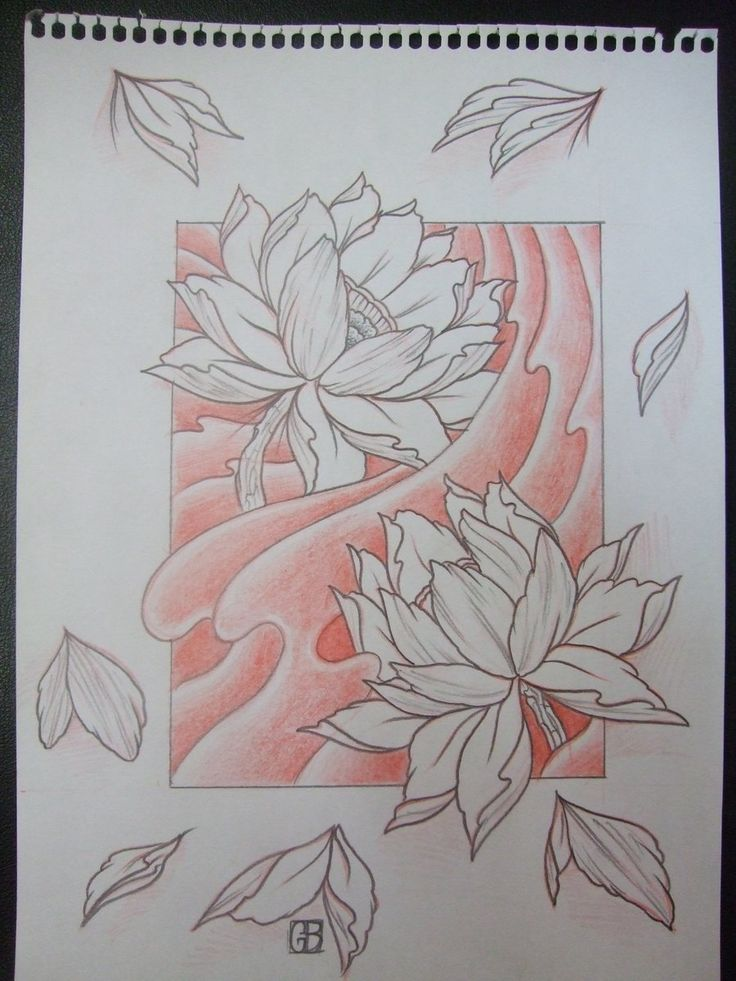 736x981 Lotus Flower Draw Japanese Nature