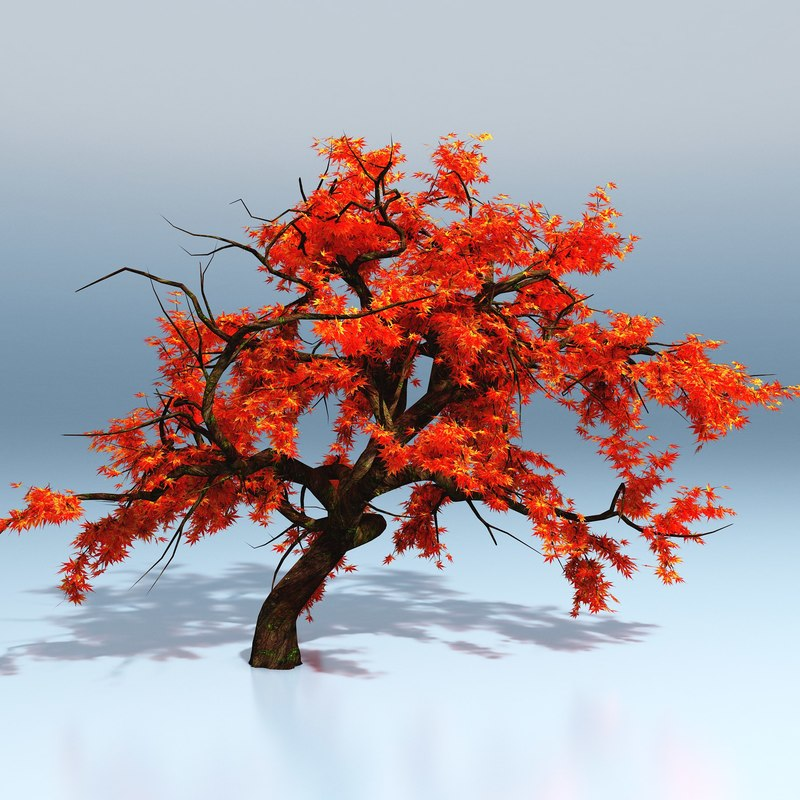 800x800 Maple Tree 3d Model