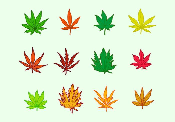 700x490 Japanese Maple Leaves