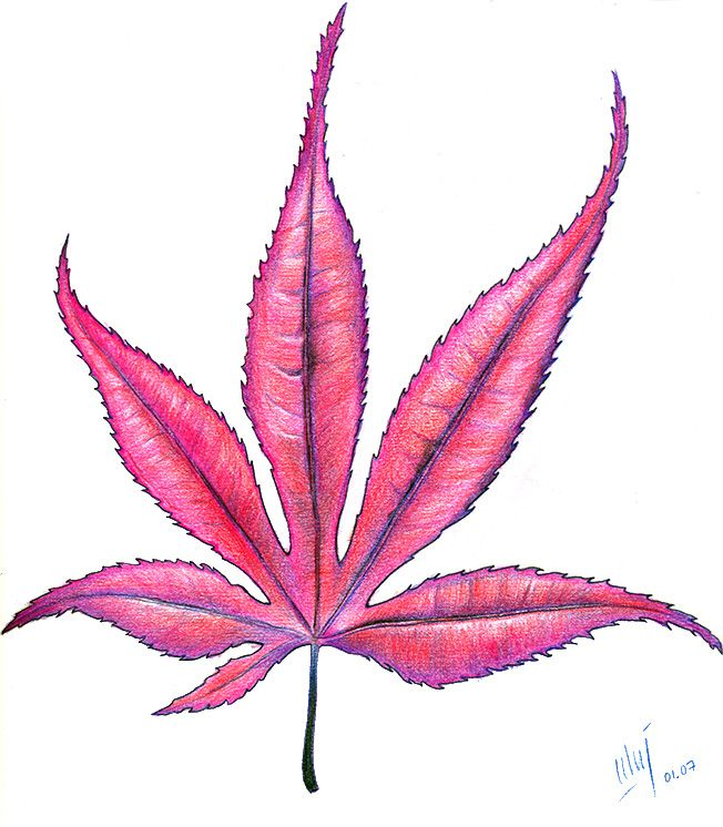652x746 Japanese Maple Leaf The Only Tattoo I Would Ever Get! Tatuajes