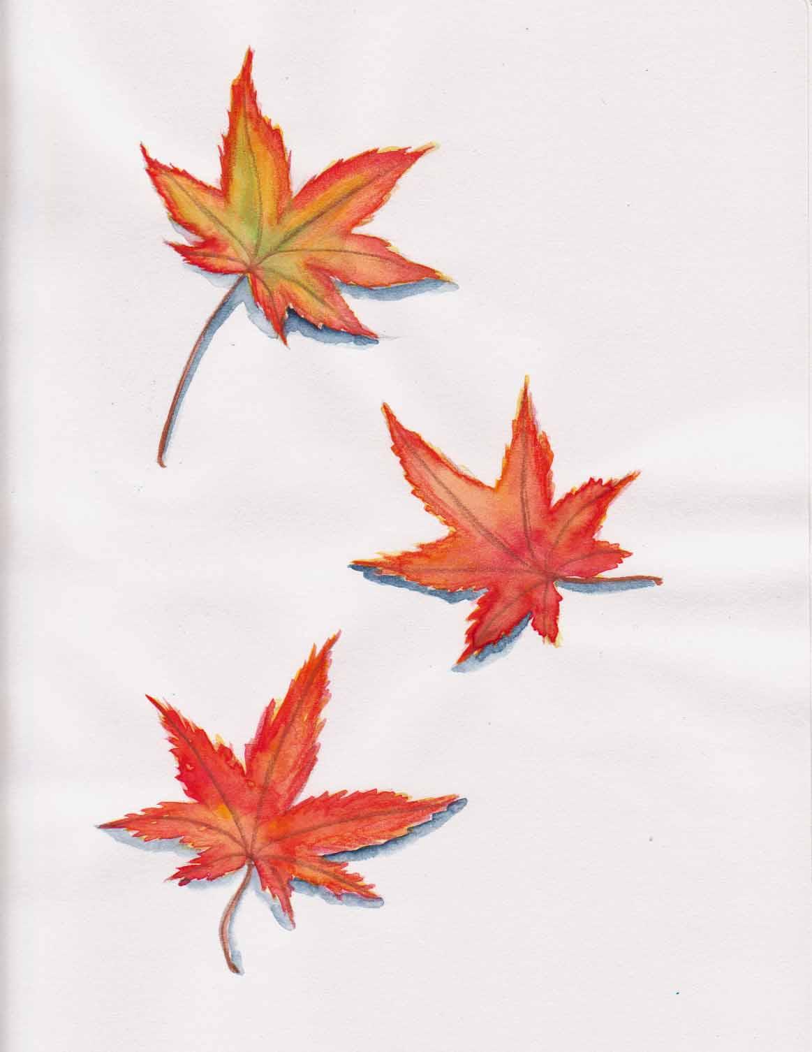 1163x1506 Naomi Orana's Studio Autumn's Japanese Maple