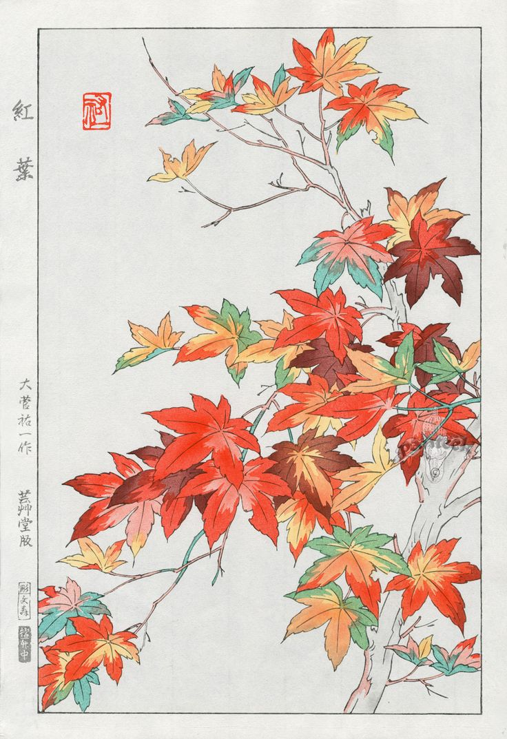 Japanese Maple Tree Drawing At Getdrawings Free Download