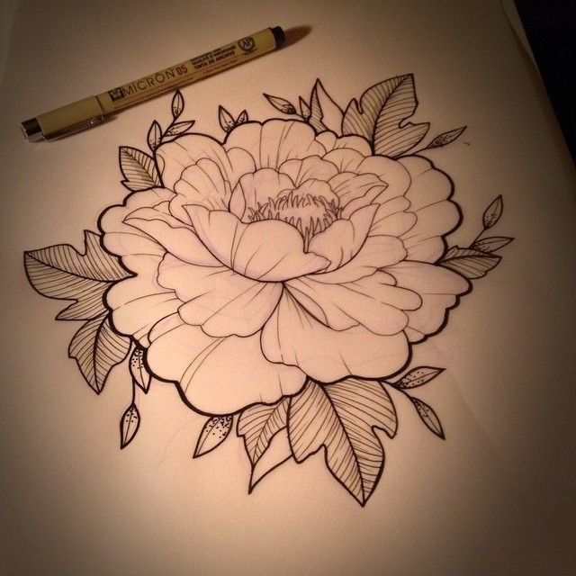 640x640 Japanese Peony Drawing Unique Best 25 Peony Drawing Ideas