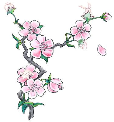 375x400 Cherry Blossom Drawing How To Draw A Cherry Blossom For Kids Step