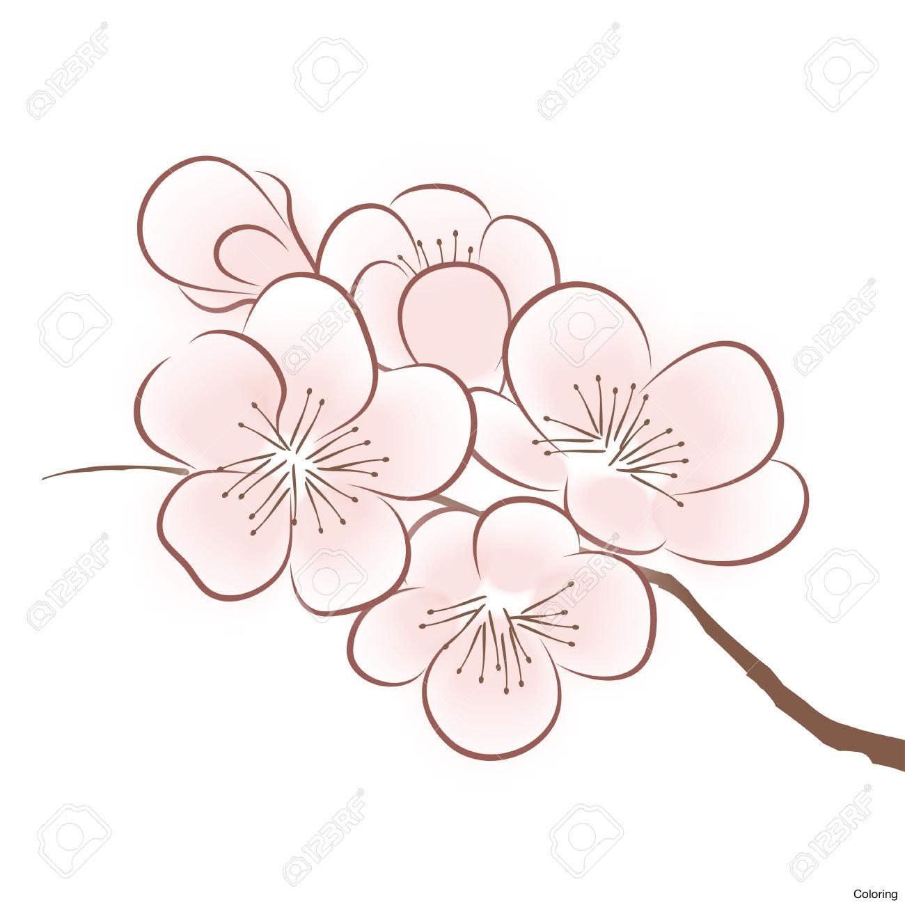 1300x1300 Sakura Flower Draw Drawn Cherry Blossom Japanese Plant 6 Blossoms