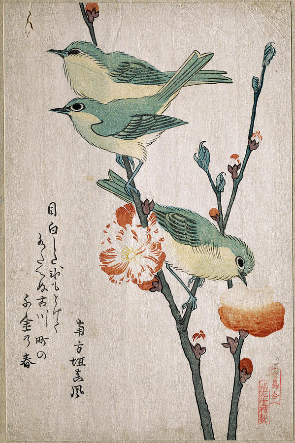 599x900 Japanese White Eyes Perching On A Branch Of Peach Tree Drawing By