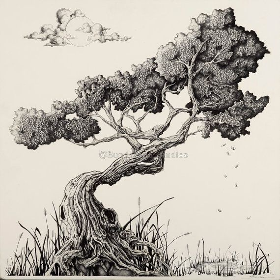 570x570 Japanese Bonsai Tree Drawing