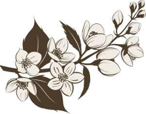 300x235 Jasmine Flower Tattoo Ile Ilgili Sonucu Tatoo