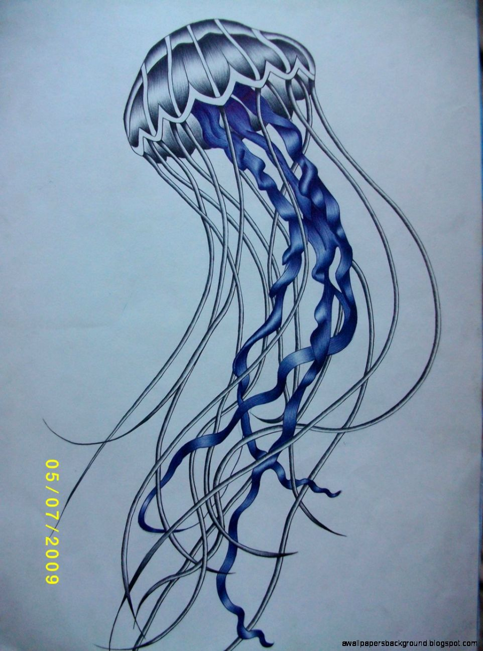 Jelly Fish Drawing at GetDrawings.com | Free for personal use Jelly ...