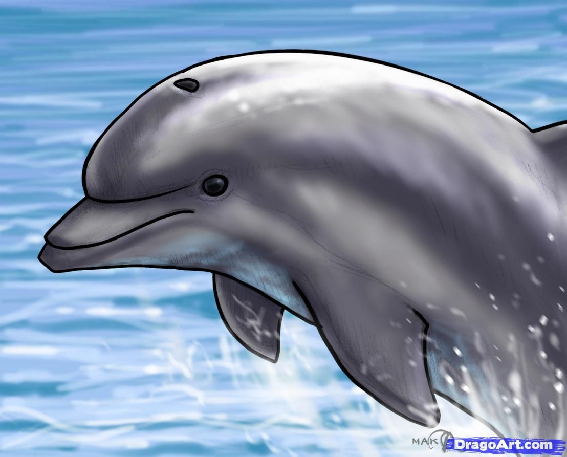 1108x893 How To Draw A Jumping Dolphin, Step By Step, Sea Animals, Animals