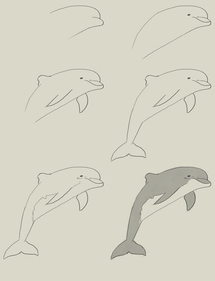 700x913 How To Draw A Jumping Dolphin Step 8 Drawing