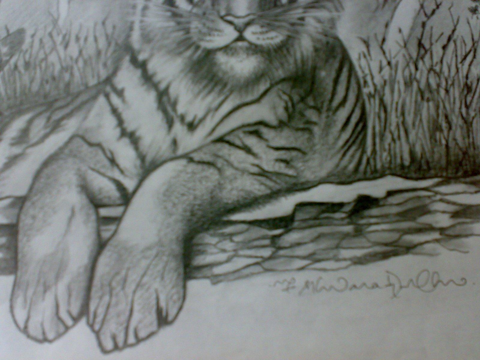1600x1200 Ferrocious Feline Tiger Claw Lion Animal Drawing Forest