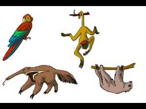 480x360 How To Draw Rainforest Animals