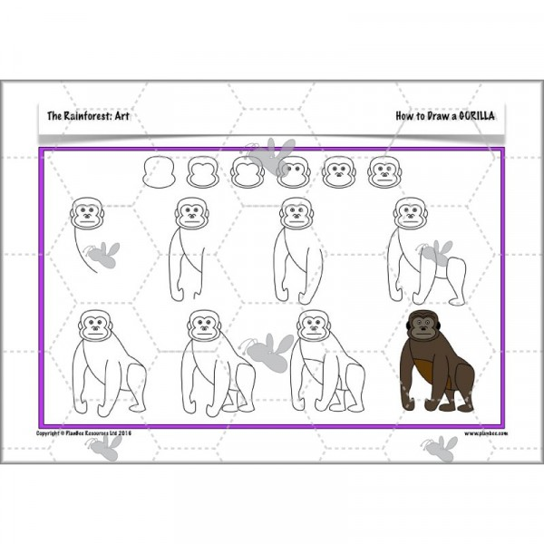 600x600 The Rainforest Drawing Animals Planbee Single Lesson