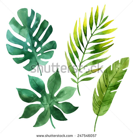 450x470 Four Tropical Leaves. Hand Drawn Leaves Illustration In Watercolor