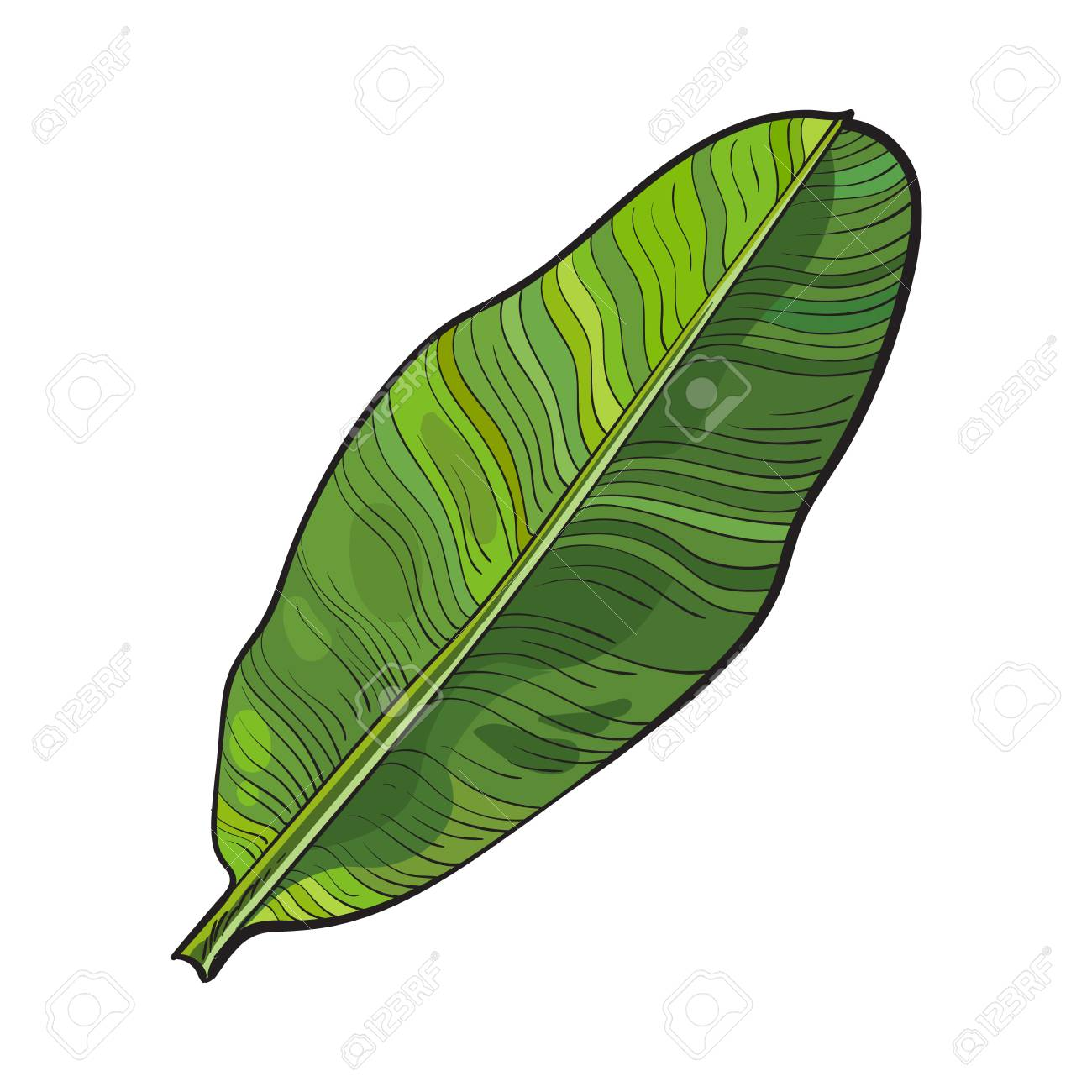 1300x1300 Full Fresh Leaf Of Banana Palm Tree, Sketch Style Vector