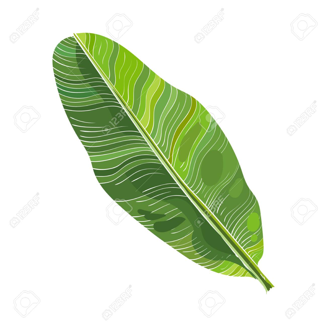 1300x1300 Full Fresh Leaf Of Banana Palm Tree, Vector Illustration Isolated