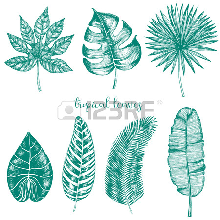 450x450 Vector Tropical Palm Leaves. Jungle Leaves Set Isolated