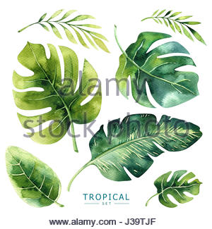 300x325 Hand Drawn Watercolor Tropical Plants Background. Exotic Palm