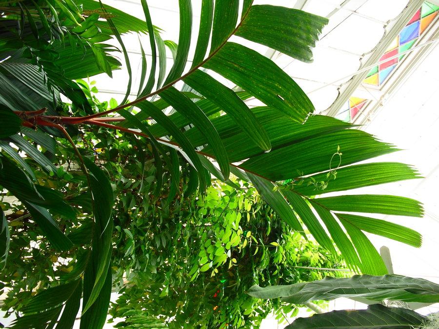 900x675 Jungle Leaves By Wafreestock