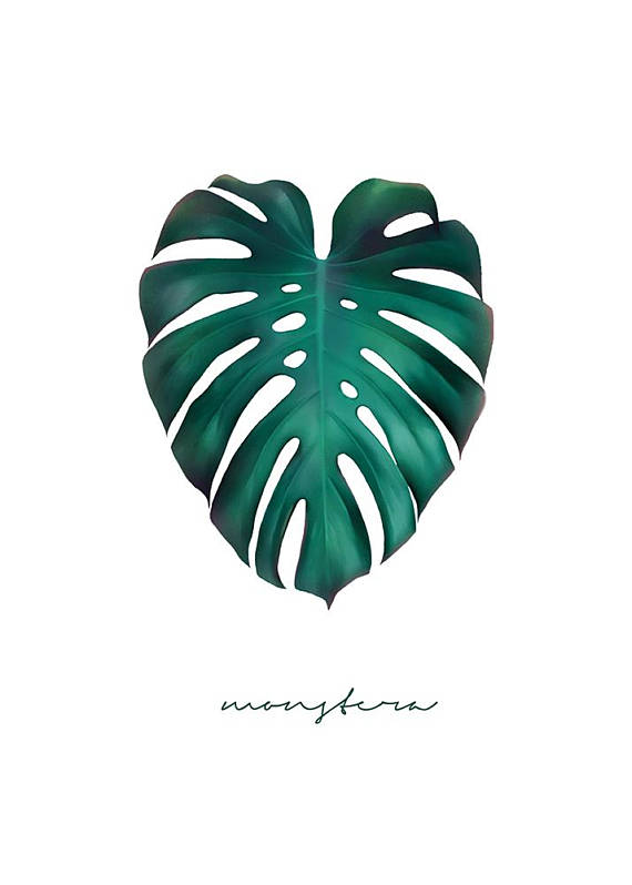 570x798 Printable Art Monstera Leaf Print Jungle Leaf Green Leaves